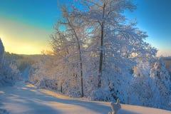 Weißes Land-Weihnachten Stockbild