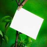 Weißes leeres Blatt Papier hängend an einer Niederlassung mit Blättern auf einem Hintergrund von gewaschenen Grüns Weißer Hinterg Lizenzfreie Stockfotografie