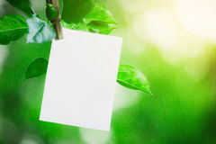 Weißes leeres Blatt Papier hängend an einer Niederlassung mit Blättern auf einem Hintergrund von gewaschenen Grüns Weißer Hinterg Stockfotos