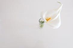 Weißes Lilly Stockfoto