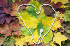 Weißes mala Rosenbeet auf dem Herbstlaub Stockfoto