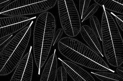 Weißes Muster von Plumeriablattadern auf schwarzem Hintergrund stock abbildung