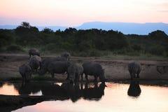 Weißes Nashorn am Wasser-Loch Stockfotos