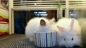 Weißes nettes Kaninchen isst stock footage