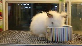Weißes nettes Kaninchen isst stock video footage