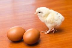 Weißes neugeborenes Huhn mit schwarzen Federn auf der Rückseite und zwei braunen Hühnereien auf einer Holzoberfläche stockbild