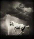 Weißes Pferd Stockbild