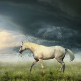 Weißes Pferd Stockbilder