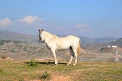 Weißes Pferd auf einem Berg am Tag Lizenzfreie Stockfotografie