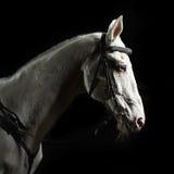 Weißes Pferd des Nahaufnahmeportraits in der Dunkelheit Lizenzfreie Stockfotografie