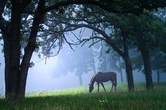 Weißes Pferd im blauen Nebel Stockfotos