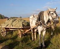 Weißes Pferd und altes telega Lizenzfreies Stockfoto