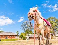 Weißes Pferd und der blaue Himmel lizenzfreies stockbild