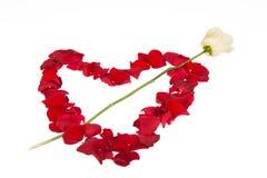 Weißes piercing Blumenblattherz Rose Lizenzfreies Stockbild