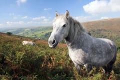 Weißes Pony auf Chinkwell Felsen Lizenzfreies Stockbild