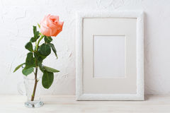 Weißes Rahmenmodell mit sahniger Rosarose im Glasvase Stockbilder