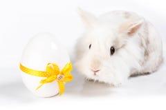 Weißes süßes Kaninchen lizenzfreie stockfotografie