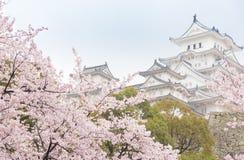 Weißes Schloss-Himeji-Schloss im Kirsche-blooson Kirschblüte, die herein blüht Lizenzfreie Stockfotos