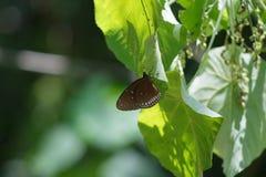 Weißes Schmetterlings-OM-Grünblatt Stockbilder