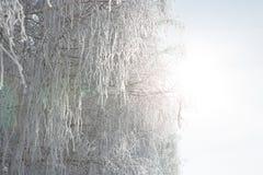 Weißes schneebedecktes des schönen Winters mit Schnee auf Baumasten Weihnachten Stockbilder