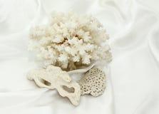 Weißes Seeandenken: eine Koralle und Steine Lizenzfreie Stockfotografie