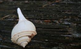 Weißes Seeoberteil Stockfotos