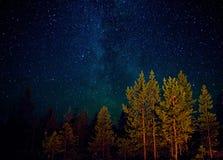 Weißes Seesternenklare Nacht, Russland Stockfotografie