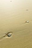 Weißes Shell auf dem Sand Lizenzfreies Stockbild