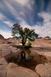 Weißes Taschen-Zusammenfassungs-Baum-Zinnoberrot-Klippen-Nationaldenkmal Utah Stockfotografie