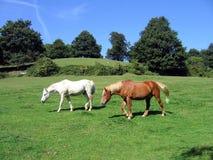 Weißes und braunes Pferd Lizenzfreie Stockbilder