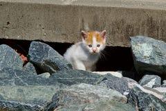 Weißes und orange Kätzchen Stockbilder