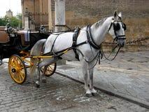 Weißes urinierendes Pferd Lizenzfreie Stockfotografie
