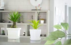 Weißes Vasengrünblatt Stockbild