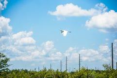 Weißes Vogelfliegen stockfotos