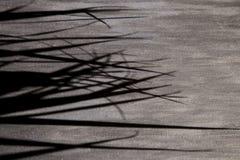 Weißes Wandleuchtesegeltuch der schwarzen grauen Hintergrundschattenpalmblätter stockfotografie
