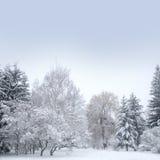 Weißes Weihnachtswald mit Schnee Stockfoto