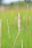 Weißes Wiesen witn Grün fängt 2 auf Lizenzfreie Stockfotos