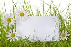 Weißes Zeichen unter Gras-und Gänseblümchen-Blumen lizenzfreie stockbilder