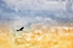 Weißkopfseeadler auf einem grauen und goldenen Himmel Stockfotografie