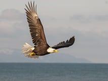 Weißkopfseeadler, der über blauem Wasser mit Hintergrund des blauen Himmels in A ansteigt Stockfoto