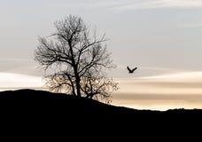 Weißkopfseeadler im Flug Lizenzfreie Stockfotografie
