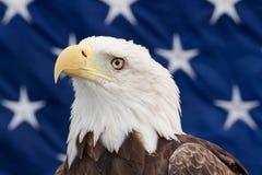 Weißkopfseeadler mit den Sternen Lizenzfreie Stockbilder