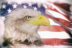 Weißkopfseeadler mit einem Hintergrund einer USA-Flagge Stockbild