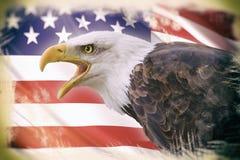 Weißkopfseeadler mit einem Hintergrund einer USA-Flagge Stockfotografie