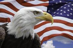 Weißkopfseeadler mit US-Flagge Lizenzfreie Stockbilder