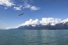 Weißkopfseeadler in Südost-Alaska lizenzfreies stockfoto