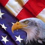 Weißkopfseeadler und USA-Flagge Stockfotografie