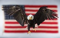 Weißkopfseeadlerfliegen mit amerikanischer Flagge Lizenzfreie Stockfotografie