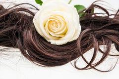 Weißrose auf braunem Haar Lizenzfreies Stockfoto