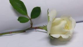 Weißrose auf einzelnem Stamm Stockfoto
